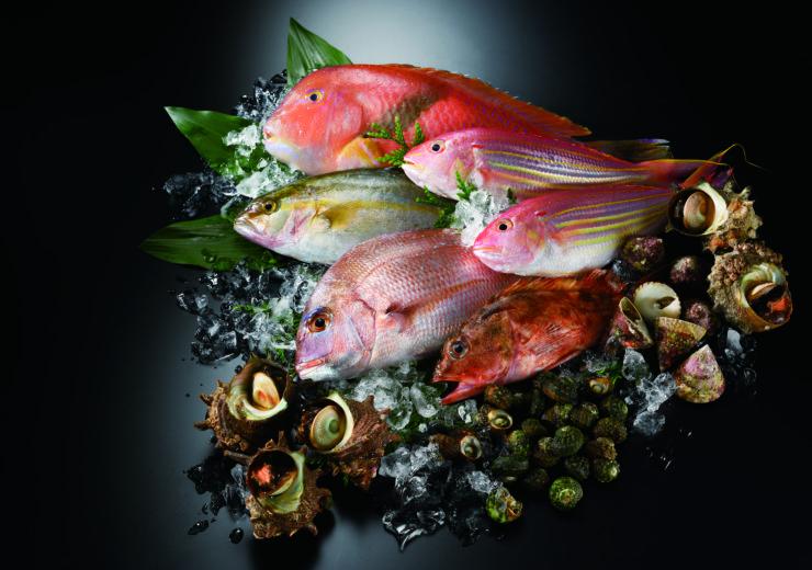 平戸地魚|平戸瀬戸市場